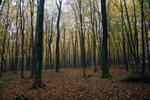 """Skrivnosten gozd v okolici jezera, v katerem se pretakajo """"zdravilne energije"""""""