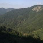 Prostranost gozdov z mnogimi grapami (foto: komar)