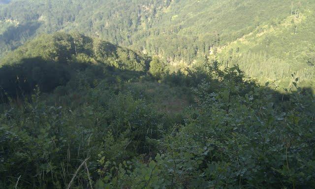 Gozd v dolini Pendirjevke (foto: komar)