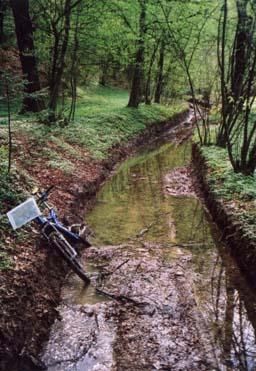 """Gorjanci so """"polni vode"""", kar omogoča rast kvalitetnih gozdov"""