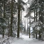 Pozimi je gozd najlepši